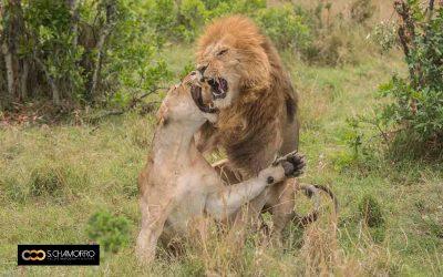 Los 6 espectáculos únicos que verás en un safari fotográfico