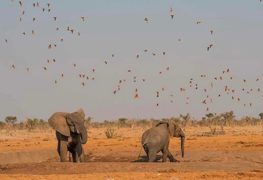Elefantes y pájaros