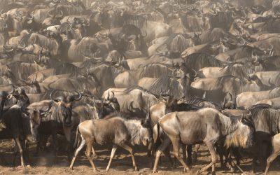 Los 6 momentazos del safari fotográfico de agosto