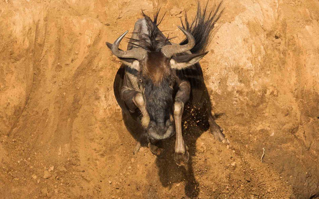 Masai Mara, el secreto mejor guardado de un año extraordinario